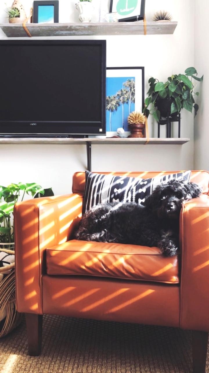 Meeka on painted chair