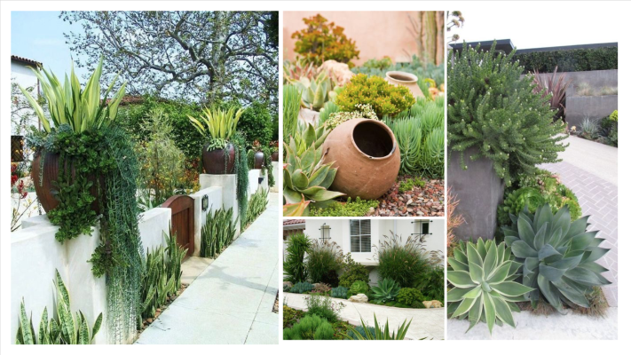drought tolerant california landscaping. green patio concept mood board. zero scaping.