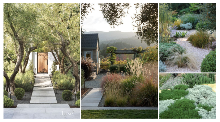 drought tolerant california landscaping. green patio concept mood board. zero scaping. spanish style garden. concrete pavers